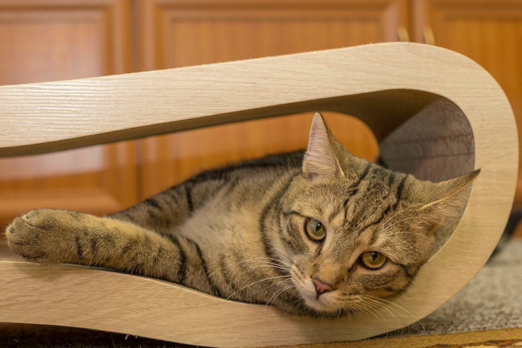kat ligt in zijn krabmeubel