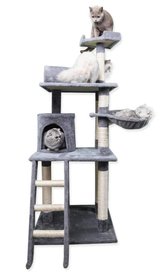 Kattenboom-Mickey
