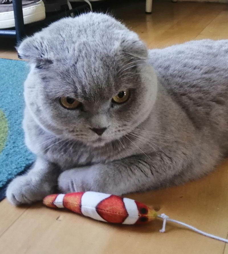 Kattenspeeltje voor Marcel