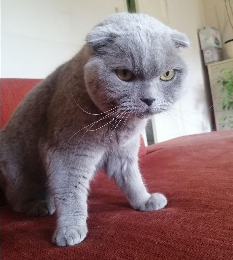 Marcel doet aan Fitness voor katten