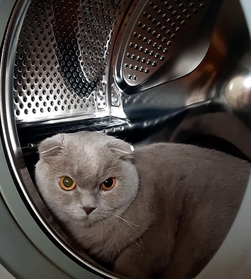 De wasmachine als krabpaal