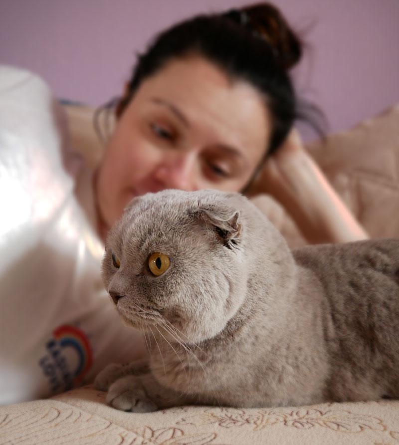 Populaire kattenrassen