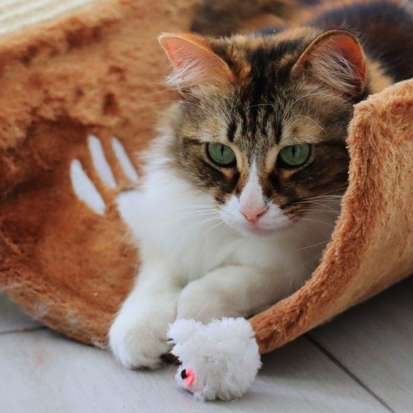 De katten krabpalen specialist